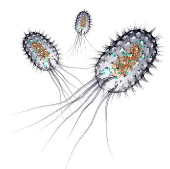 List Of Pathogens Destroyed By Uv Spectralight Ultraviolet